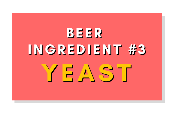 Beer Ingredient #3: Yeast